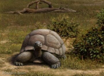Una-tortuga-terrestre