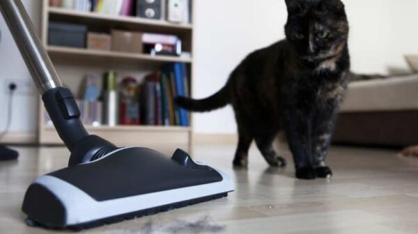 gato aspiradora